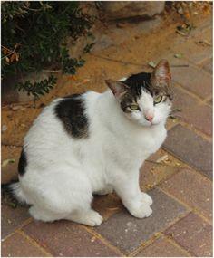 Misu,a cat that lives near my home