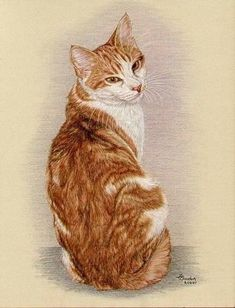 I swear this is My Strider! Watercolor Cat, Watercolor Animals, Cat Sketch, Dog Poster, Cat Colors, Ginger Cats, Cat Drawing, Dog Art, Animal Drawings