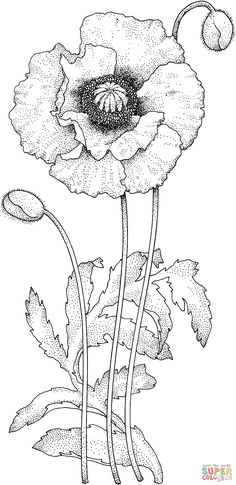 Poppy Blossom coloring page | SuperColoring.com