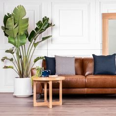 The Liam lounge and Nikki coffee table looking suave. ⠀ The Nikki is available individually or in a nesting pair. Lounge, Couch, Table, Furniture, Coffee, Home Decor, Airport Lounge, Kaffee, Drawing Rooms