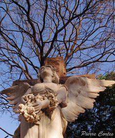 Angel's Cross