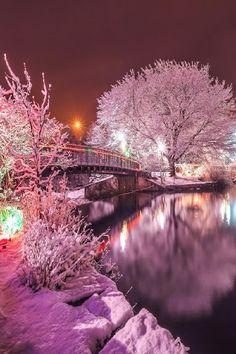 Winter lights in Bowring Park ~ St. Johns, Newfoundland, Canada