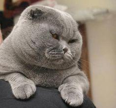 Картинки самых красивых кошек..