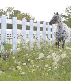 this looks like the non wood fence I'd love to have all the way around the farm :-)
