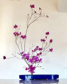 自由花 野山で採取のミツバツツジ もうすぐきれいな葉が出揃います〜✨ * #kadoh #ikebana #flower #flowers #flowerstagram #flowerarrangement #flowerart #floralart #art #japan…