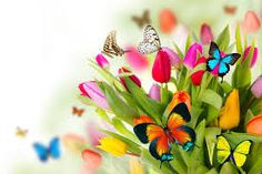 96 Sunday Special Good Morning Quotes with Nice Wallpapers New Wallpaper Hd, Butterfly Wallpaper, Butterfly Flowers, Madame Butterfly, Butterfly Wings, Hd Nature Wallpapers, Free Hd Wallpapers, Sunday Special, Happy Sunday