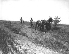 Plowing with a mule team, sowing lespedeza by hand in Sumner County, Tennessee. 1941