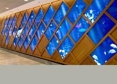 So Ouest - galerie marine - aquarium géant interactif