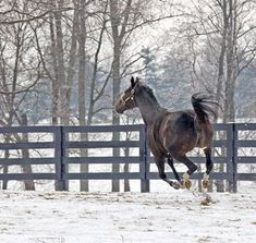 2010 Horse of the Year ZENYATTA - a photographic tribute / Great pictures Zenyatta Horse, Thoroughbred Horse, Horse Racing Results, Picture Mix, Triple Crown Winners, Living Legends, Horse Photography, Great Pictures, Kentucky Derby