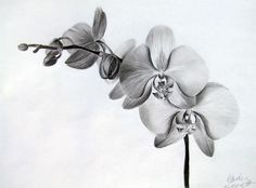 orchid tattoo designs - Google Search                                                                                                                                                      More