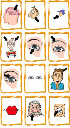 Parts of Head & Face FlashCards Pictorial Representations #langchat