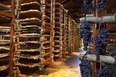 Montepulciano Tuscany Italy Vineyards | The Avignonesi winery in Montepulciano