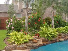 Landscaping Around Pool In Texas For Around Pools But I Like For Other Areas The Palm Pool Landscaping Ideas Houston Texas Houston Landscaping, Landscaping Around Pool, Swimming Pool Landscaping, Landscaping Trees, Tropical Landscaping, Landscaping With Rocks, Landscaping Software, Landscaping Edging, Landscaping Melbourne