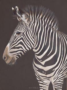 Looking Right (Grevy's Zebra)