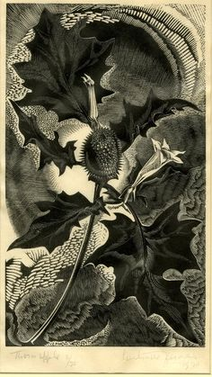 Thornapple by Gertrude Hermes 1930 Wood-engraving on handmade Japanese paper, edition of 30