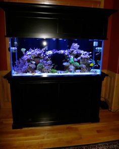 creative inspiration beautiful aquariums for home. 29 Best Home Aquarium Furniture Ideas To Beautify Your Room  Aquariums ideas and stand