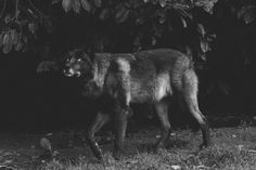 Μια φωτογράφος έκλεισε «ραντεβού» με μια αγέλη λύκων και το αποτέλεσμα κόβει την ανάσα