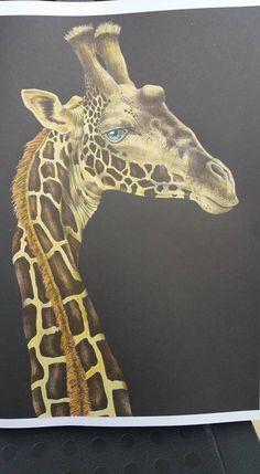 Giraffe Page 14 By Caroline W