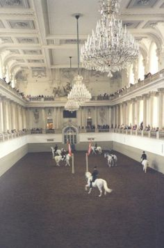 Spanish Riding School in Vienna, Austria (Lipizzaner Stallions) All The Pretty Horses, Beautiful Horses, Spanish Riding School Vienna, Places To Travel, Places To Go, Claude Monet, Vincent Van Gogh, Dressage, White Horses