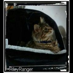 #rileyranger #baDDkittY #violentlysweet #cats
