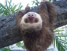 "There was a kid at work doing this today. I immediately thought ""Sloth!"" I have a problem!"