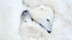 Loving bears