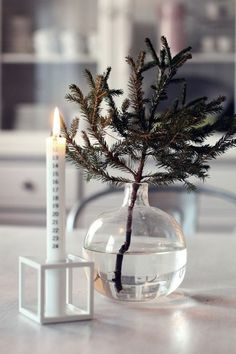 simple christmas- love the branch in a vase!