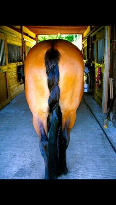Spiral dutch horse tail braid, this would be cool for classes that don't have braiding requirements Horse Mane Braids, Horse Hair Braiding, All The Pretty Horses, Beautiful Horses, Animals Beautiful, Tail Braids, Horse Tail, Horse Costumes, Horse Grooming