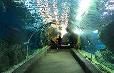Siam Ocean World in Bangkok
