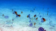 Farverige fisk ved Aitutaki, Cook Islands