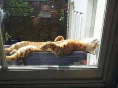 Sun bathing kitty ...