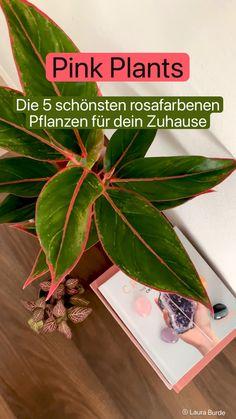 Short Plants, Apartment Interior Design, Trends, Ficus, Potted Plants, Hot Pink, Plant Leaves, Life Hacks, Indoor