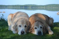 Ben and Brie posing for Pet Loss Note Cards