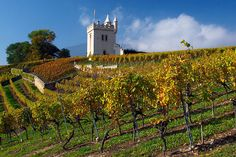 Boudry castle and its vineyards near Neuchâtel, Switzerland.