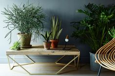 5 No-Kill House Plants for Any Home on Food52