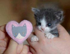 Kittie baby