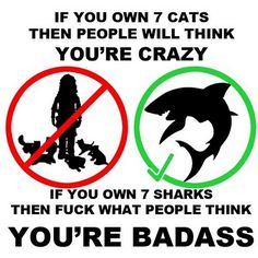 If you own 7 cats then people will think you're crazy. If you own 7 sharks, then fuck what people think, you're badass Lol, Haha Funny, Funny Stuff, Funny Shit, Funny Things, Random Stuff, Random Things, That's Hilarious, Happy Things