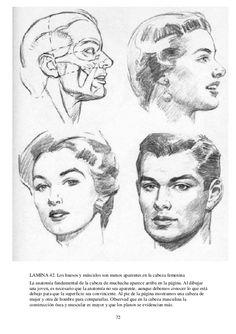 72 LAMINA 42. Los huesos y músculos son menos aparentes en la cabeza femenina La anatomía fundamental de la cabeza de much...
