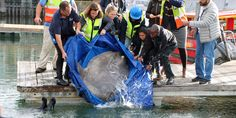 Aquarium and construction companies come together to rescue trapped ocean sunfish V&a Waterfront, The V&a, Aquarium, Construction Companies, Internet, News Stories, Cape Town, Oceans, South Africa
