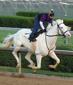 Valkyrie Tyr - dominant white Thoroughbred stallion, steeplechaser, 16.3hh, foaled January 11, 2005.  By Hard Cash out of Valkyrie Skuld.