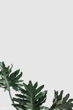 Palm Leaf Wallpaper, Plant Wallpaper, Plant Aesthetic, Aesthetic Images, Instagram Frame, Backgrounds Free, Leaf Art, Flowers Nature, Aesthetic Iphone Wallpaper