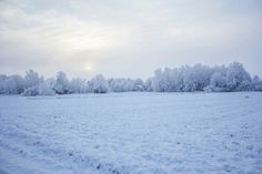Winterlandscape in Sweden  Photo: Emma Ask  #winter #Sweden #landscape