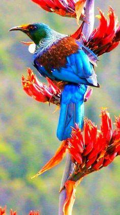 Beautiful Birds, Beautiful Pictures, Tui Bird, Rainforest Animals, New Zealand Art, Bizarre, Pow Wow, Bird Pictures, Colorful Birds