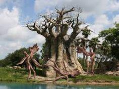 Image result for australia strange trees images