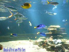 Nausicaa - visite de l'aquarium (Boulogne-sur-mer)