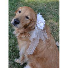 Hondenhalsband Met Bloem Trouwversiering - oooohhh