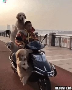 Were going on a trip in our favourite rocket ship zooming through the roads big good Bois. Animals And Pets, Funny Animals, Cute Animals, Pet Shop, Cute Puppies, Dogs And Puppies, Pet Dogs, Dog Cat, Doggies