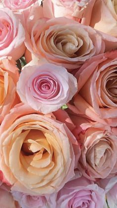 Birth Flowers, Cut Flowers, Cool Backgrounds For Iphone, June Flower, Wholesale Roses, Shady Lady, Order Flowers Online, Beautiful Flowers Garden, Romantic Roses