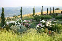 A mediterranean garden in  Tuscany