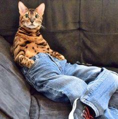 Wear jeans cat